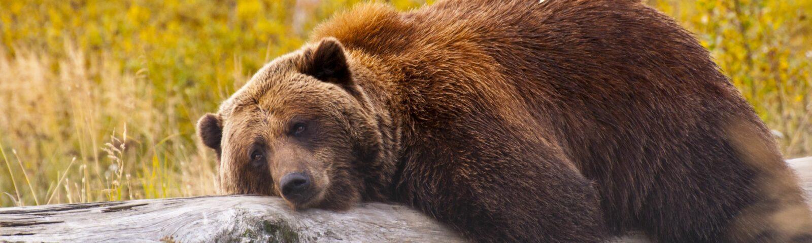 על דובים, הלוואות והעסקת עובדים